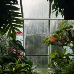 Hoe breng je leven aan in de tuin?